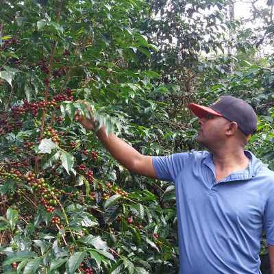 dawi_coffee_farm_ (7)