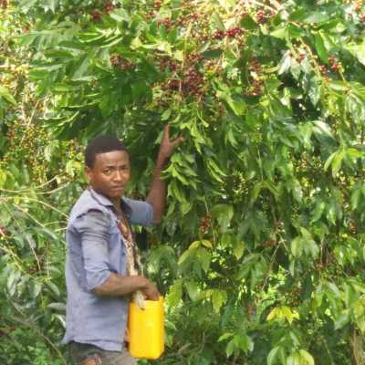 dawi_coffee_farm_ (9)